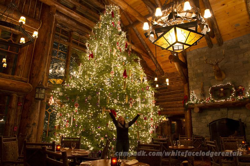 christmas trees light up the lodge entrance - The Christmas Lodge