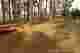 Coles Creek State Park Campsite Photos Site 211