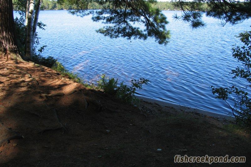 Campsite Photo of Site 206 at Fish Creek Pond Campground, New York - Shoreline