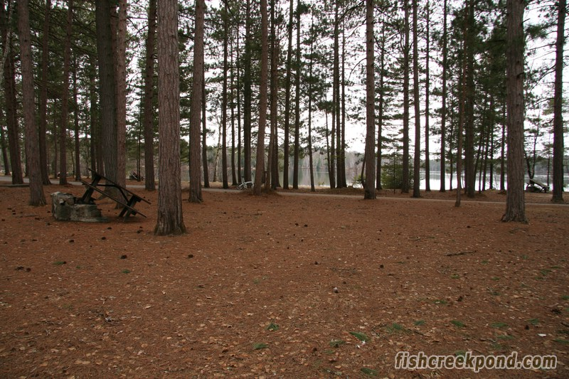 Campsite Photo of Site A19 at Fish Creek Pond Campground, New York - Looking Back Towards Road
