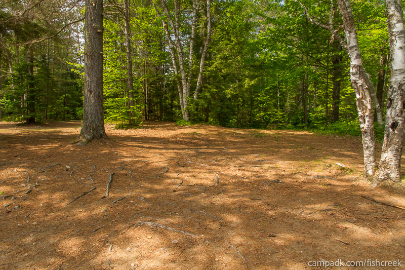 Campsite Photo of Site 138 at Fish Creek Pond Campground, New York - Looking Back Towards Road