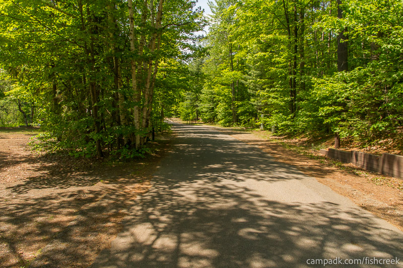 Campsite Photo of Site 157 at Fish Creek Pond Campground, New York - View Down Road from Campsite
