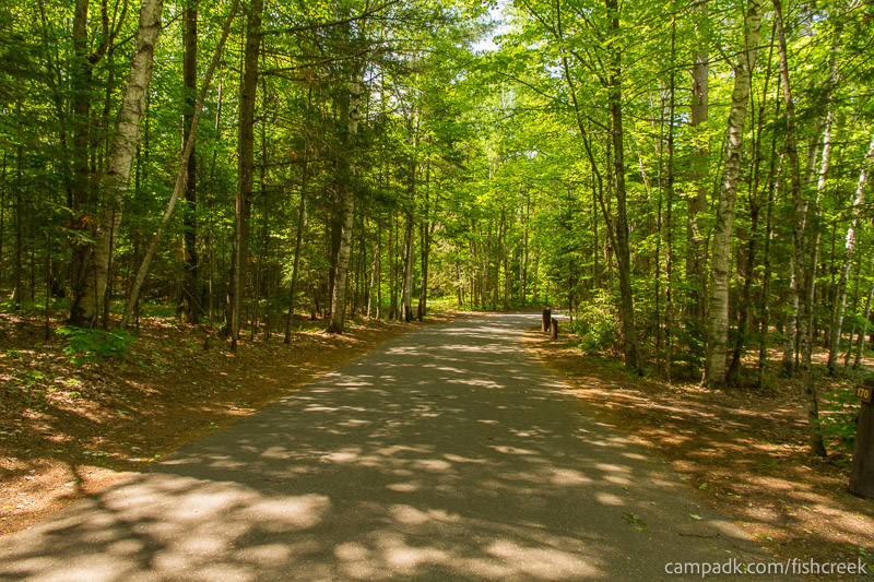 Campsite Photo of Site 170 at Fish Creek Pond Campground, New York - View Down Road from Campsite