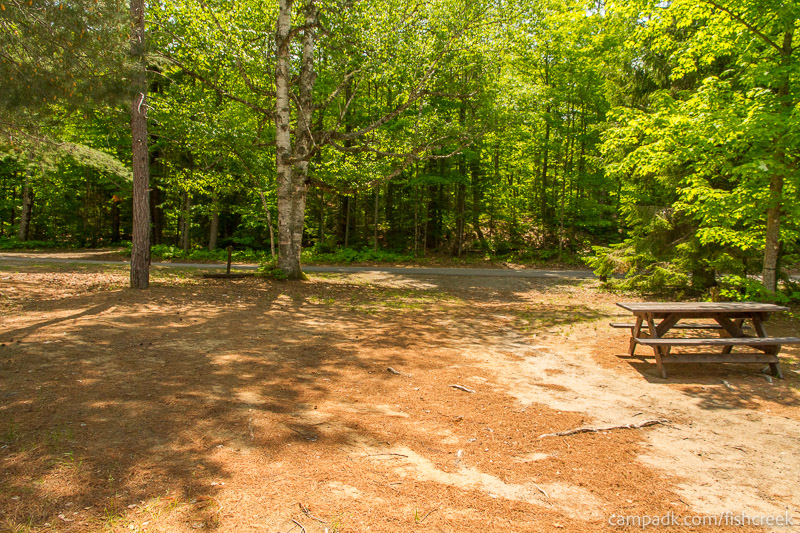 Campsite Photo of Site 175 at Fish Creek Pond Campground, New York - Looking Back Towards Road
