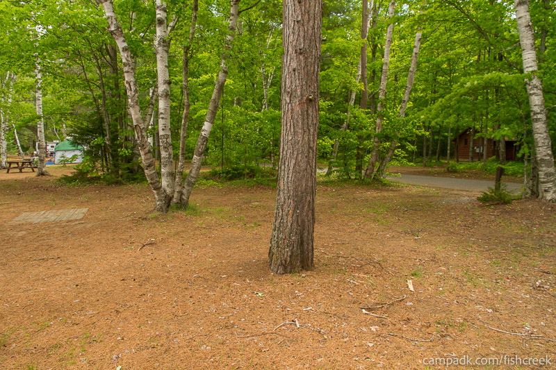 Campsite Photo of Site 203 at Fish Creek Pond Campground, New York - Cross Site View