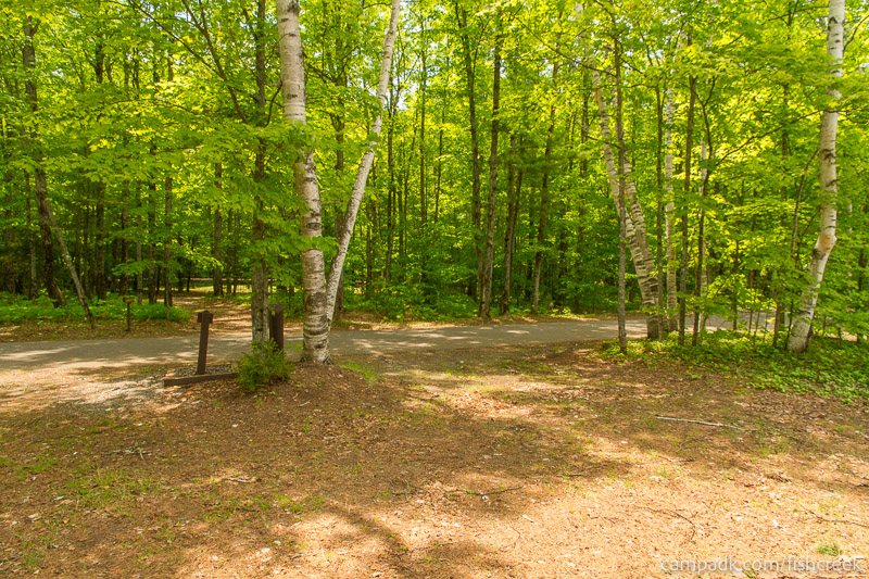 Campsite Photo of Site 203 at Fish Creek Pond Campground, New York - Looking Back Towards Road
