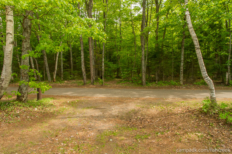 Campsite Photo of Site 218 at Fish Creek Pond Campground, New York - Looking Back Towards Road