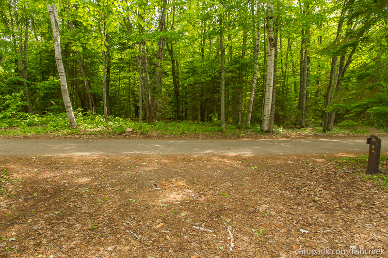 Campsite Photo of Site 220 at Fish Creek Pond Campground, New York - Looking Back Towards Road