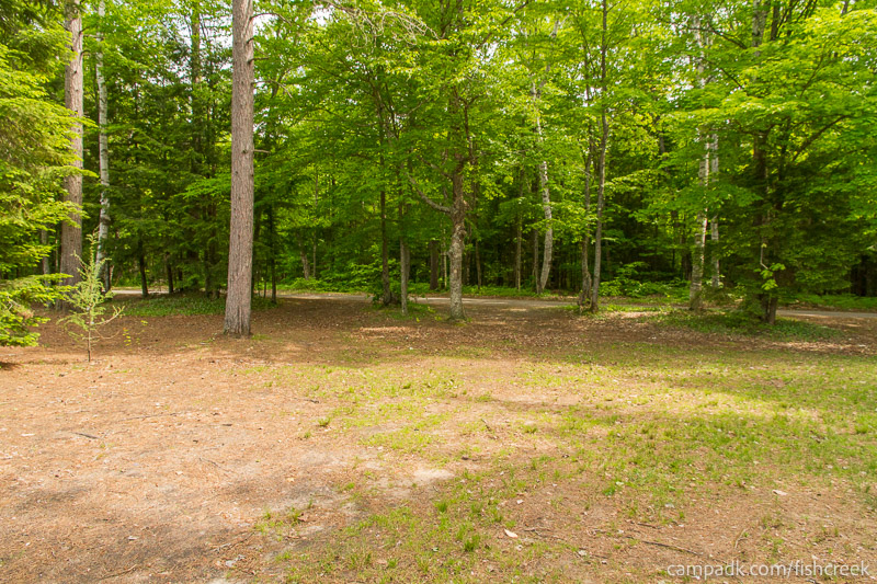 Campsite Photo of Site 221 at Fish Creek Pond Campground, New York - Looking Back Towards Road