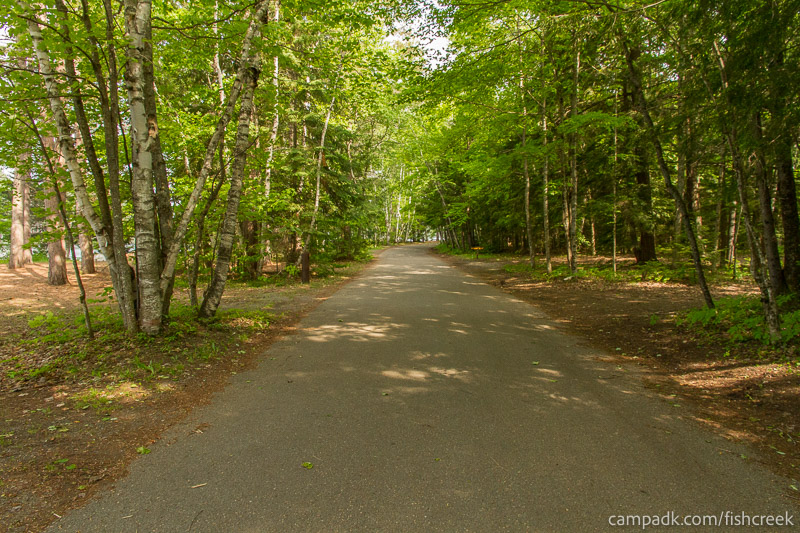 Campsite Photo of Site 244 at Fish Creek Pond Campground, New York - View Down Road from Campsite