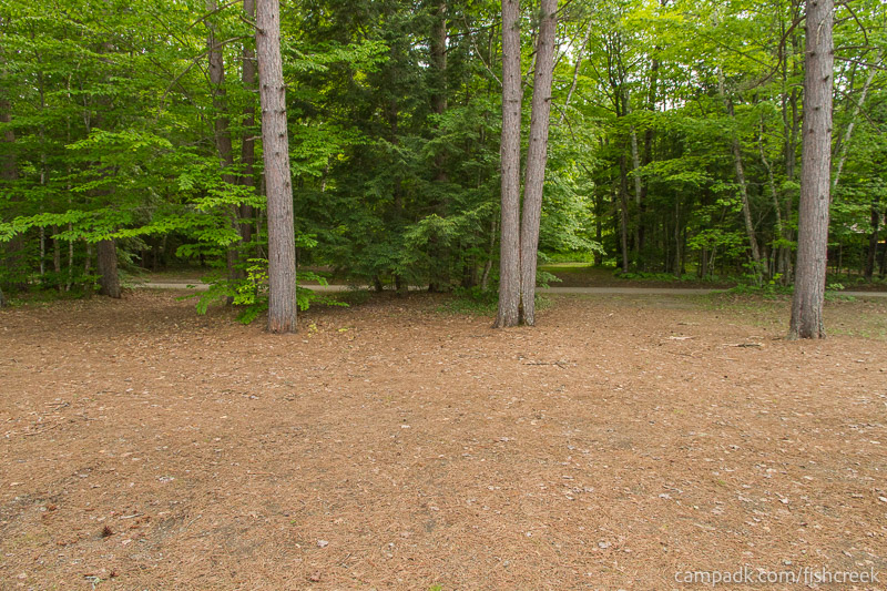 Campsite Photo of Site 245 at Fish Creek Pond Campground, New York - Looking Back Towards Road
