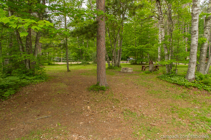 Campsite Photo of Site A1 at Fish Creek Pond Campground, New York - Looking at Site from Road