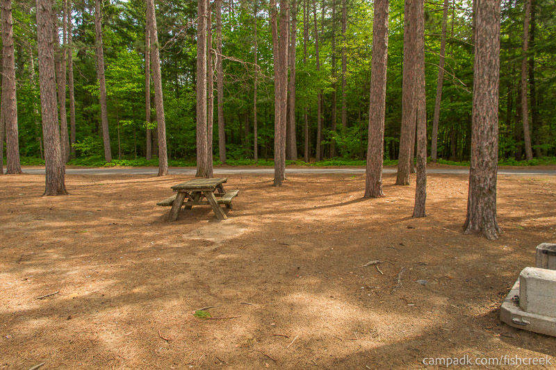 Campsite Photo of Site 21 at Fish Creek Pond Campground, New York - Looking Back Towards Road