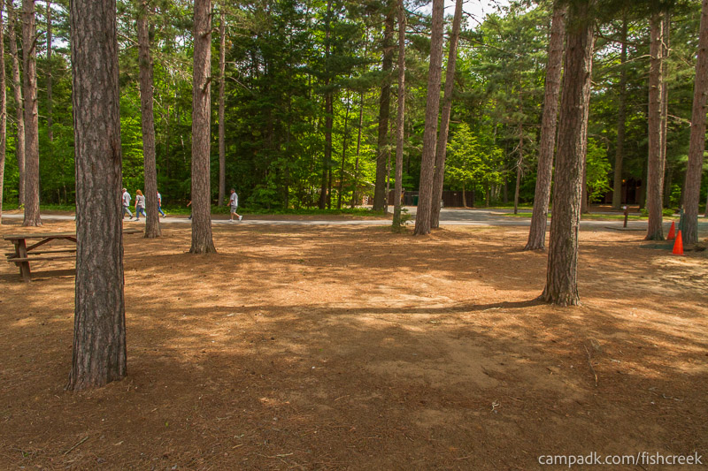 Campsite Photo of Site 14 at Fish Creek Pond Campground, New York - Looking Back Towards Road