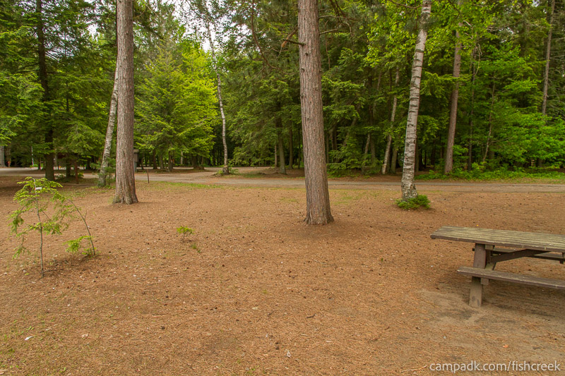 Campsite Photo of Site 2 at Fish Creek Pond Campground, New York - Looking Back Towards Road