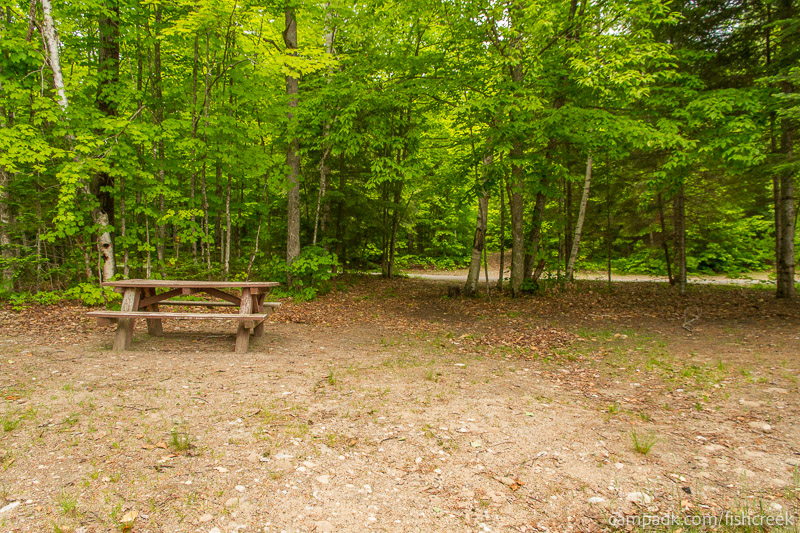 Campsite Photo of Site 161 at Fish Creek Pond Campground, New York - Looking Back Towards Road