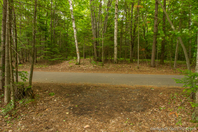 Campsite Photo of Site 169 at Fish Creek Pond Campground, New York - Looking Back Towards Road