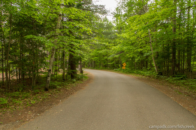 Campsite Photo of Site 266 at Fish Creek Pond Campground, New York - View Down Road from Campsite