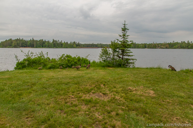 Campsite Photo of Site 287 at Fish Creek Pond Campground, New York - Cross Site View