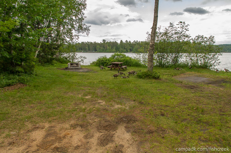 Campsite Photo of Site 64 at Fish Creek Pond Campground, New York - Looking at Site from Part Way In