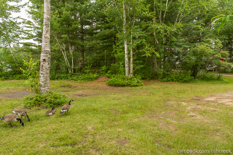 Campsite Photo of Site 64 at Fish Creek Pond Campground, New York - Cross Site View