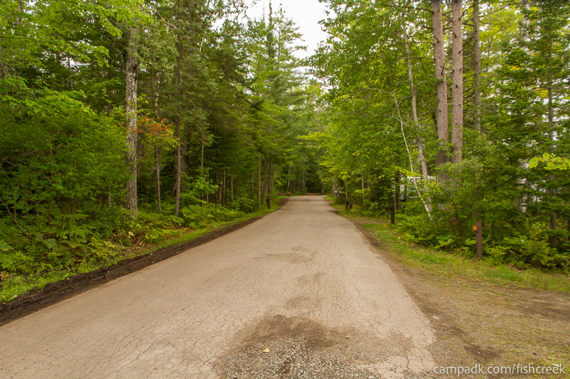 Campsite Photo of Site 281 at Fish Creek Pond Campground, New York - View Down Road from Campsite