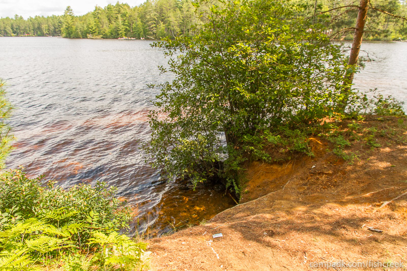 Campsite Photo of Site 249 at Fish Creek Pond Campground, New York - Shoreline
