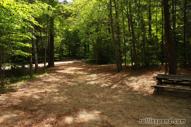 Campsite Photo of Site 173 at Rollins Pond Campground, New York - Looking Back Towards Road