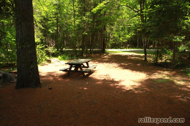 Campsite Photo of Site 213 at Rollins Pond Campground, New York - Looking Back Towards Road