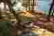 Wellesley Island State Park Deer Area